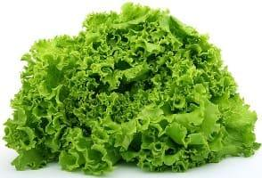 Lettuce/салат