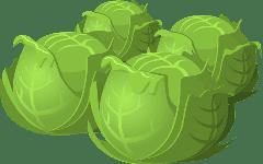 Cabbage/капуста