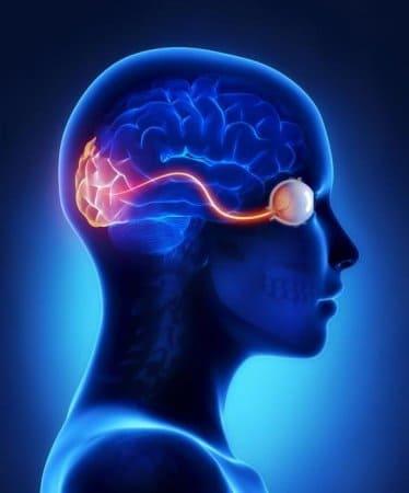 работа мозга при изучении английского языка