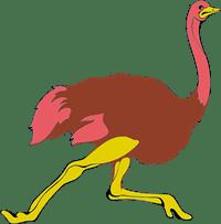 ostrich/страус