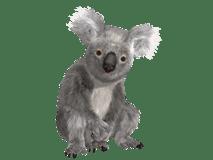 coala/коала