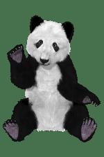 panda/панда
