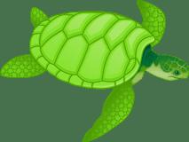 tortoise/черепаха