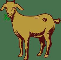 goat/козел