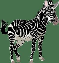 zebra/зебра