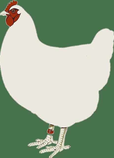 петух - cockerel