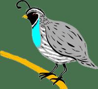 перепел - quail