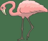 фламинго - flamingo
