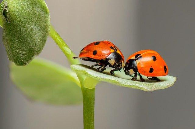 насекомые на английском - иллюстрация к статье